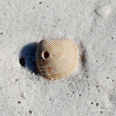 Photograph - One Orange Striped Sea Shell With Hole Macro On Fine Wet Sand Square Format by Shawn O'Brien