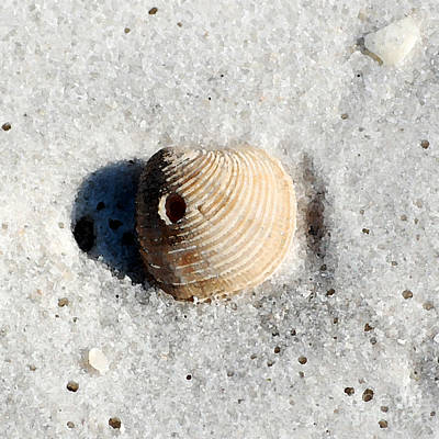Photograph - One Orange Striped Sea Shell With Hole Macro On Fine Wet Sand Square Format Watercolor Digital Art by Shawn O'Brien