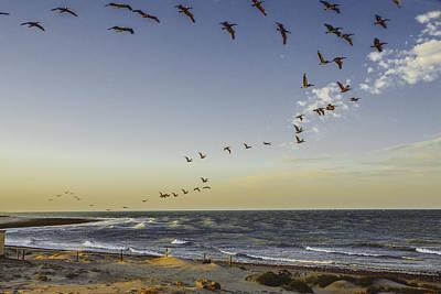 Sea Of Cortez Painting - One Pelican Two Pelican Three Pelican by Leena Hannonen