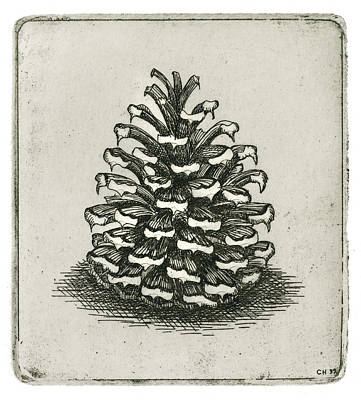 Drawing - One Pinecone by Charles Harden