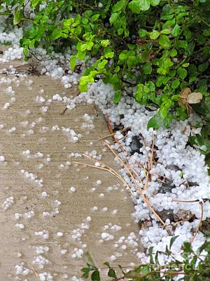 Photograph - one Quarter inch Hail April 4 11 2016 by Phyllis Kaltenbach