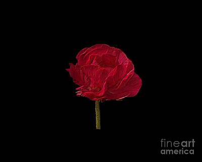 Photograph - One Red Flower Tee Shirt by Donna Brown