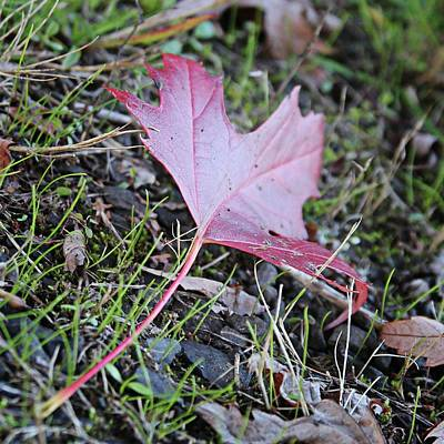 Photograph - One Red Leaf by Katie Wing Vigil