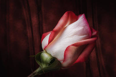 Fabric Photograph - One Red Rose Still Life by Tom Mc Nemar