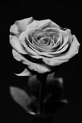 Photograph - One Rose In Monochrome by SR Green