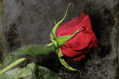 Digital Art - One Rose by M Montoya Alicea