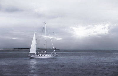 Photograph - One Sail by Robin-Lee Vieira