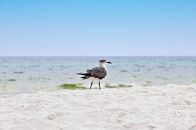 Photograph - One Seagull On A Sandy White Beach In Florida by Vizual Studio