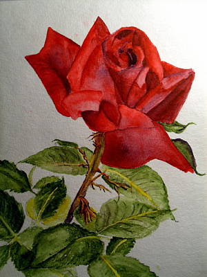 Painting - One Single Red Rose by Carol Grimes
