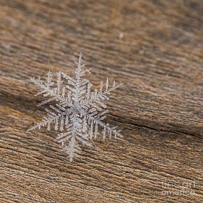 Photograph - One Snowflake by Ana V Ramirez