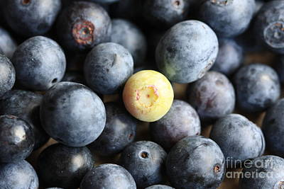 Photograph - One Sour Berry by Kim Henderson