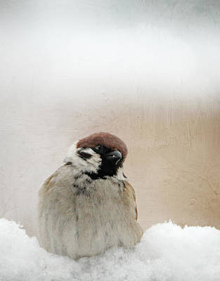 Animales Photograph - One Sparrow In Snow by Heike Hultsch