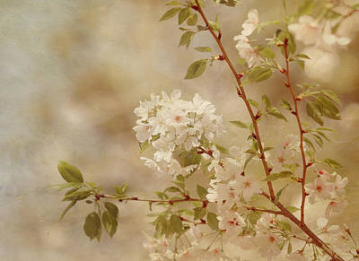 Photograph - One Spring Day by Kim Hojnacki