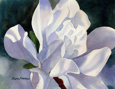 White Flowers Painting - One Star Magnolia Blossom by Sharon Freeman