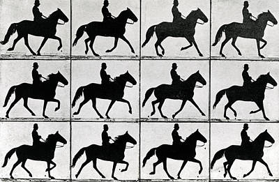 Dressage Photograph - One Stride In Eleven Phases by Eadweard Muybridge