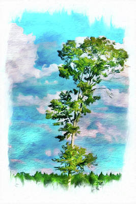 Photograph - One Tree Against The Sky by Judi Bagwell