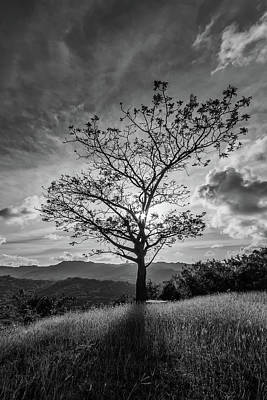 Photograph - One Tree Hill by Andre Donawa