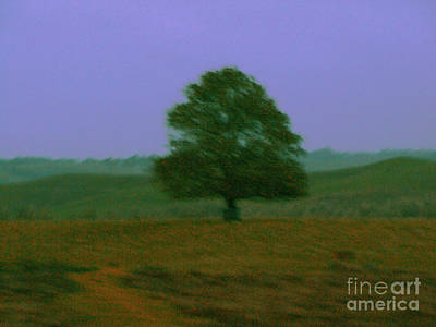 Photograph - One Tree Hill by Karen Lewis