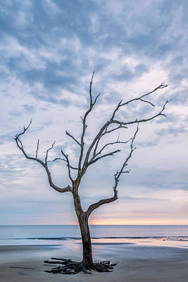 Photograph - One Tree In Jekyll by Jon Glaser