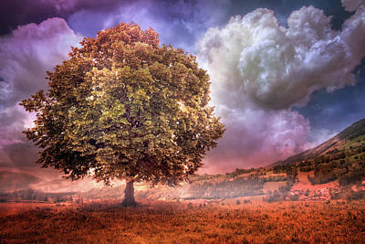 Art Print featuring the photograph One Tree In The Meadow by Debra and Dave Vanderlaan