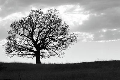 Photograph - One Tree On A Hill by Vonda Barnett