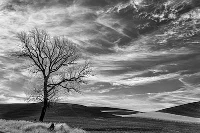 Photograph - One Tree On The Hill by Jon Glaser