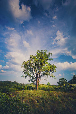 Photograph - One Tree by Shane Holsclaw