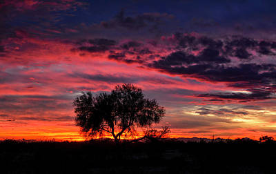 Photograph - One Tree Sunset  by Saija Lehtonen