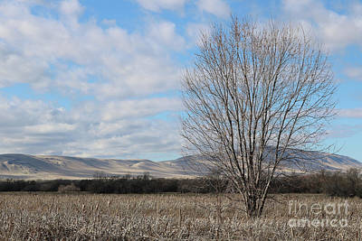 Photograph - One Tree With Clouds Hills And Cattails by Carol Groenen