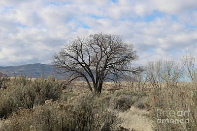 Photograph - One Tree With Sagebrush And Hillss by Carol Groenen
