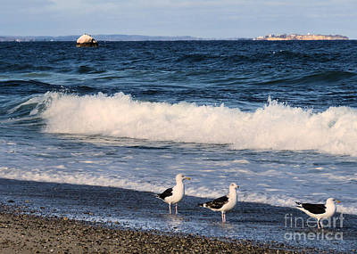 Photograph - One Two Three Seagulls by Janice Drew