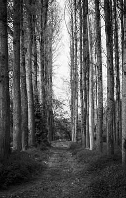 Photograph - One Way by Stewart Scott