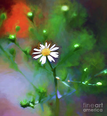 Photograph - One White Flower by Kerri Farley