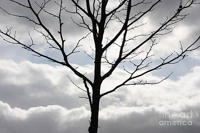 Contemplative Photograph - One Winter Tree With Clouds by Carol Groenen