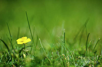 Photograph - One Yellow Flower Surrounded Of Greenery by Kennerth and Birgitta Kullman