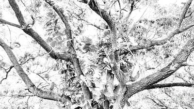 Photograph - Oneness Discovery Black And White by Rachel Hannah