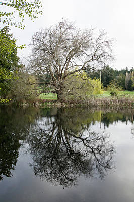 Photograph - Tree Reflections by Marilyn Wilson