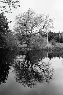 Photograph - Tree Reflections - Bw by Marilyn Wilson