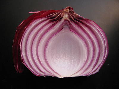Photograph - Onion by Lindie Racz