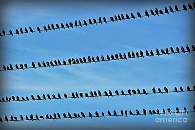 Online Birding Art Print
