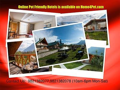 Friendly Digital Art - Online Pet Friendly Hotels Is Available On Home4pet by John Lee