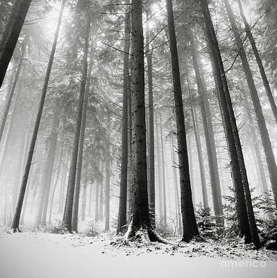 Photograph - Only The Forests Know Why by Ronny Behnert