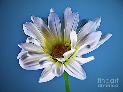 Photograph - Only You 18-28 by Ray Shrewsberry