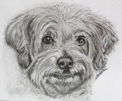 Pup Drawing - Only You by Susan A Becker