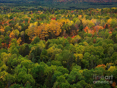 Autumn Photograph - Ontario Fall Nature Scenery by Oleksiy Maksymenko