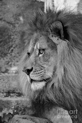 African Photograph - Onyo #11 Black And White by Judy Whitton