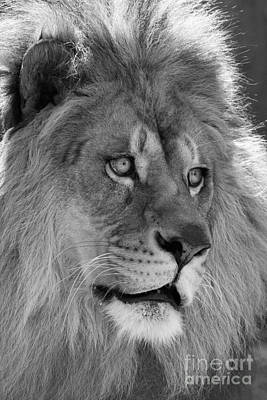 Lion Photograph - Onyo #23  Black And White by Judy Whitton