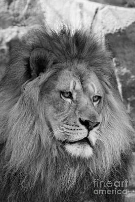 Photograph - Onyo #29  Black And White by Judy Whitton