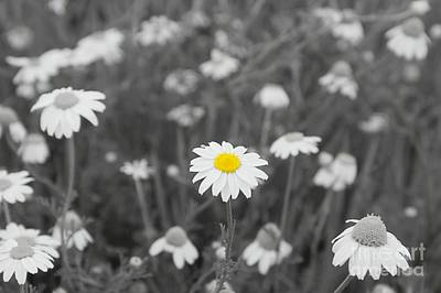 Photograph - Oopsy Daisy by Benanne Stiens