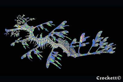 Photograph - Opalised Sea Dragon by Gary Crockett